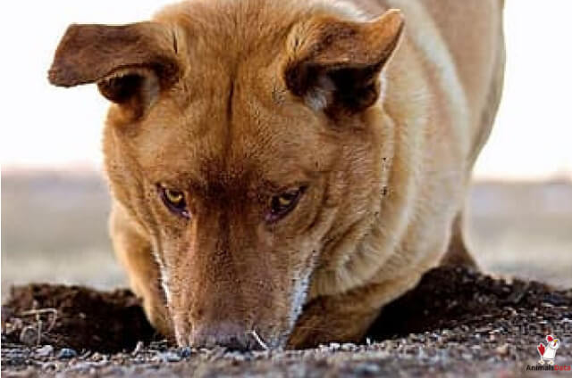 Why Dogs Dig in The Dirt