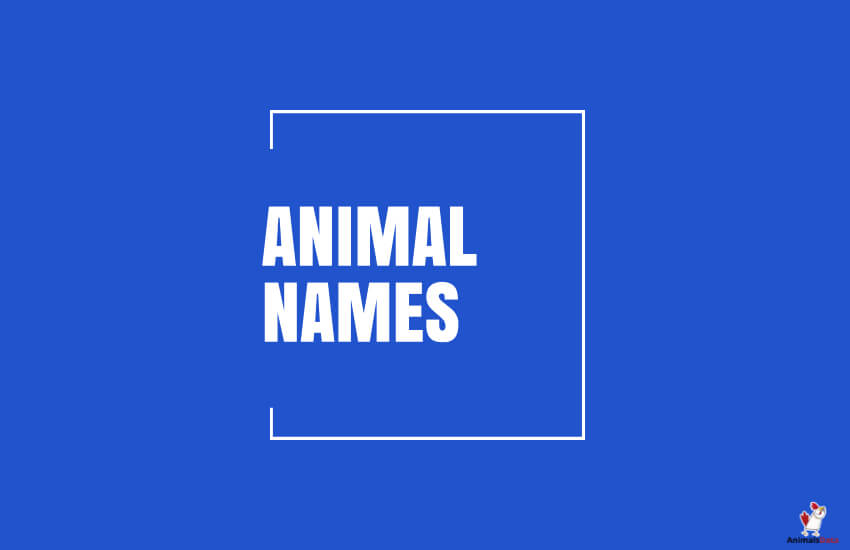 Animal Names