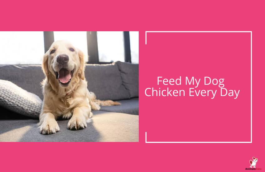 Feed My Dog Chicken Every Day