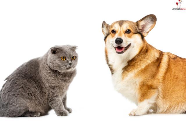 Animals That Bark