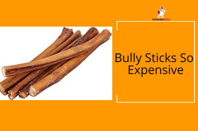 Bully Sticks So Expensive