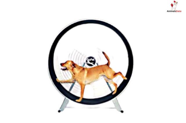 Build A Dog Exercise Wheel
