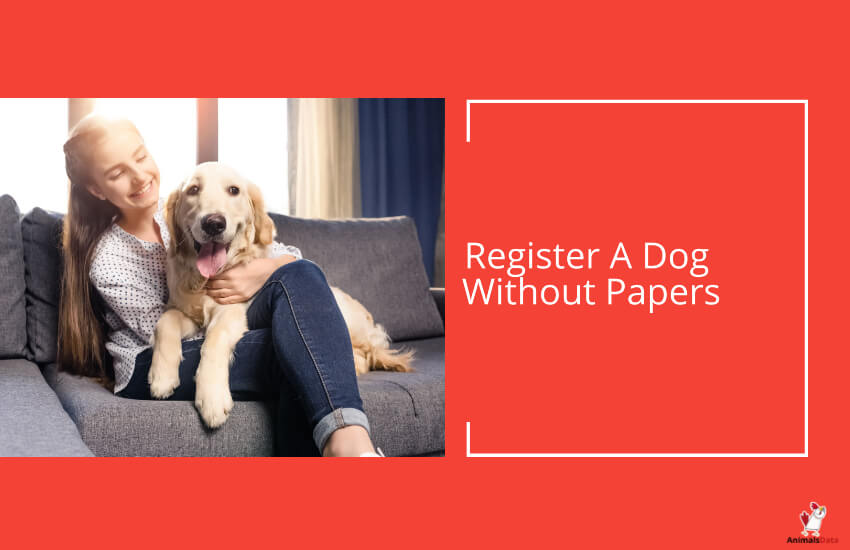 Register A Dog Without Papers