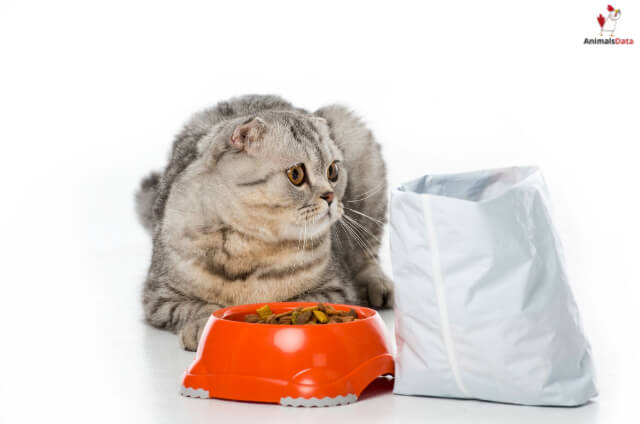 Cats Eat Before Cat Food