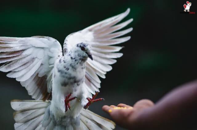 Birds Have Fries