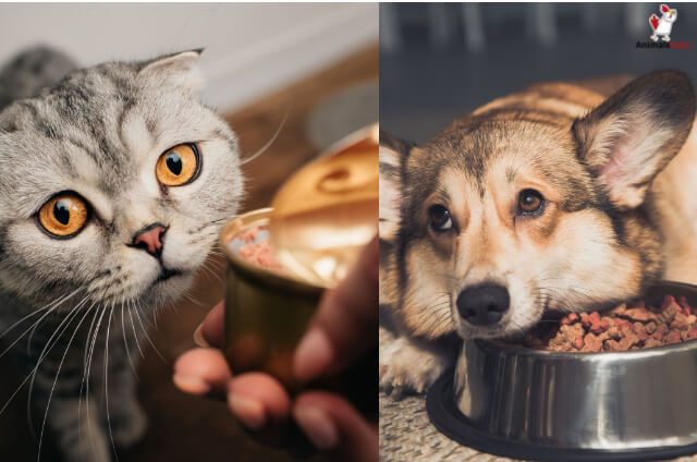 Cat Food VS. Dog Food