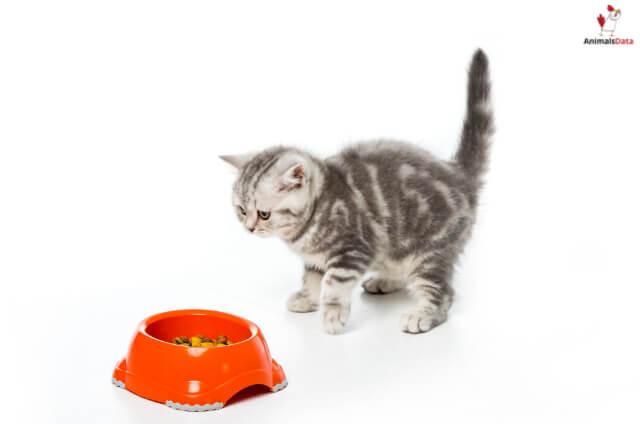 Cat Food Alternatives