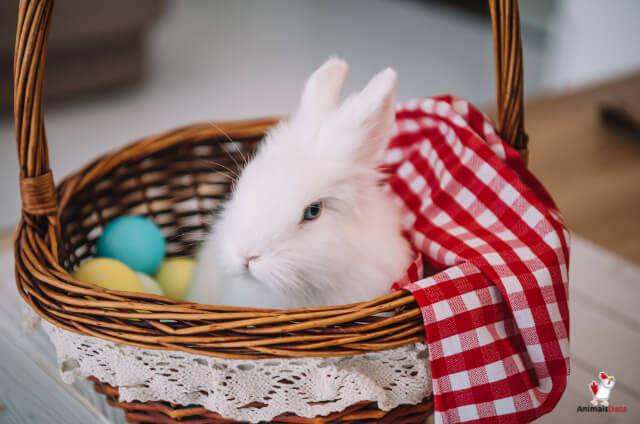 Are Rabbits Harmful To Humans
