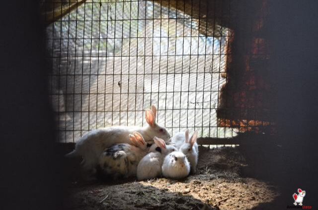 time-rabbits-take-to-have-babies