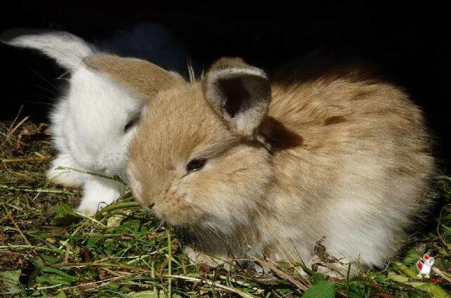 Bunnies At Petsmart