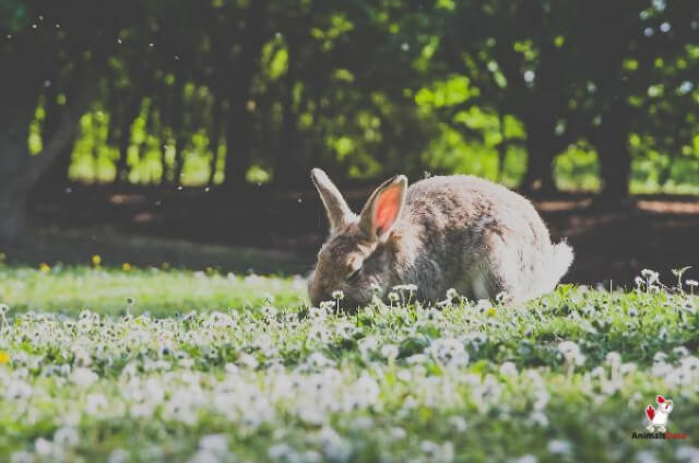 Are Rabbits Vegetarians