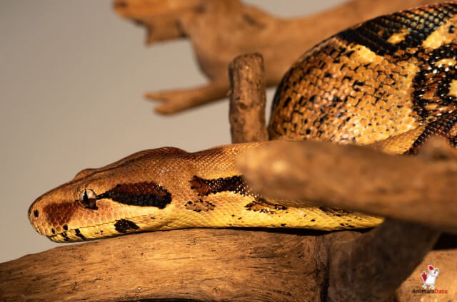 Do Snakes Have Bones