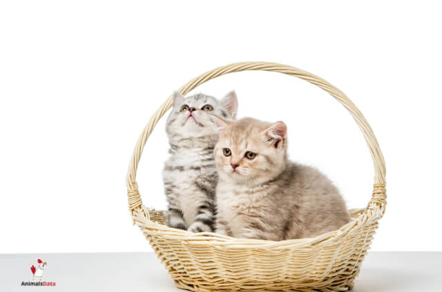 Foster Cats