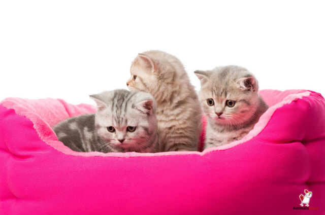 Is Baby Powder Safe For Cats