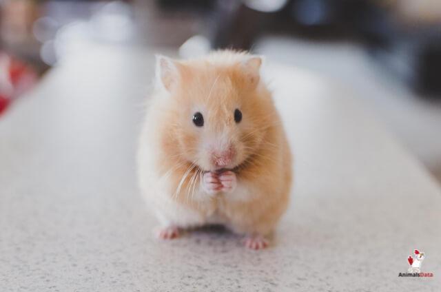 Bug Bombs Kill Mice