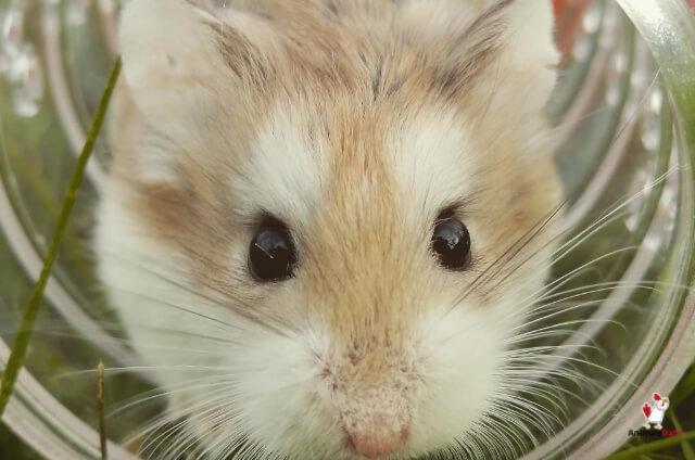 Does Borax Kill Mice?