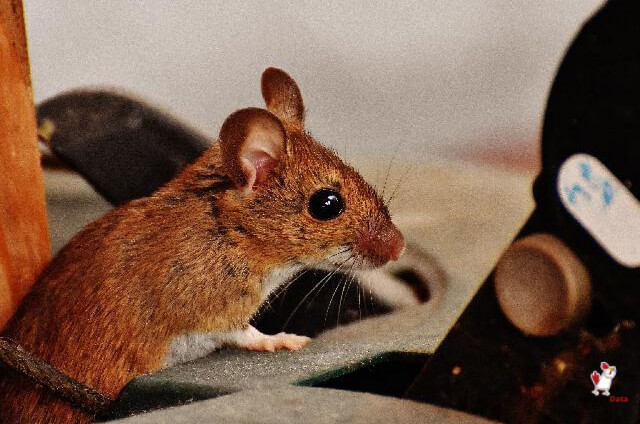 Bleach Repel Mice