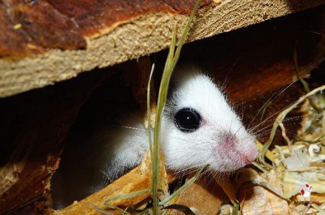 Get Rid Of Mice Under Deck
