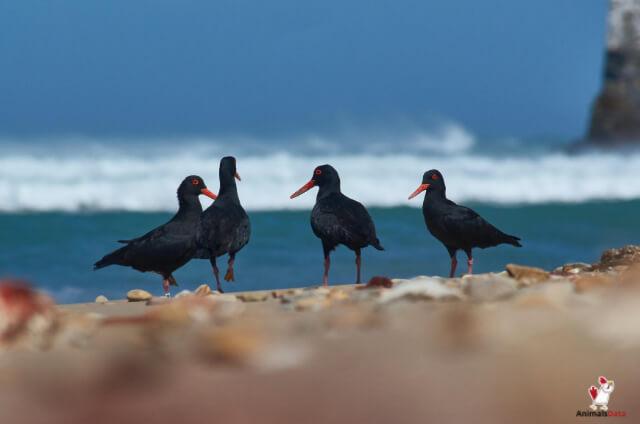 Black Birds Gather