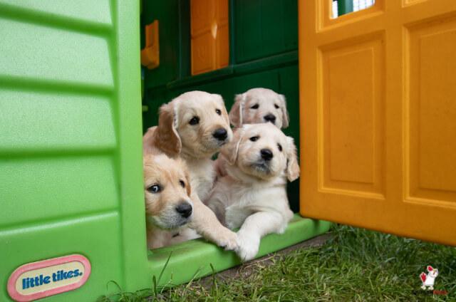 Sell Puppies On Craigslist