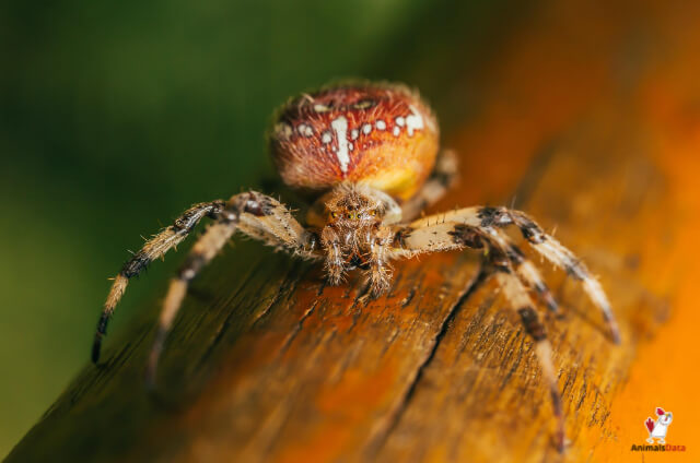 Stop Spiders From Climbing