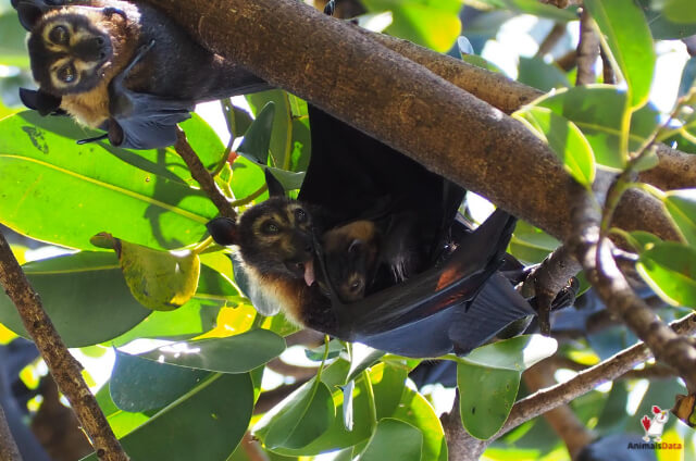 Are Bats Intelligent