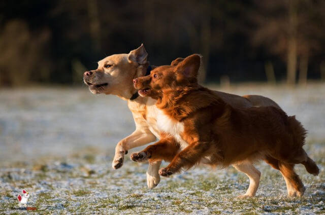 Is Dog A Mammal