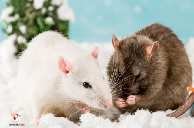Toothpaste Kill Mice