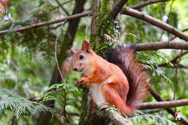 Squirrels Eat Mice