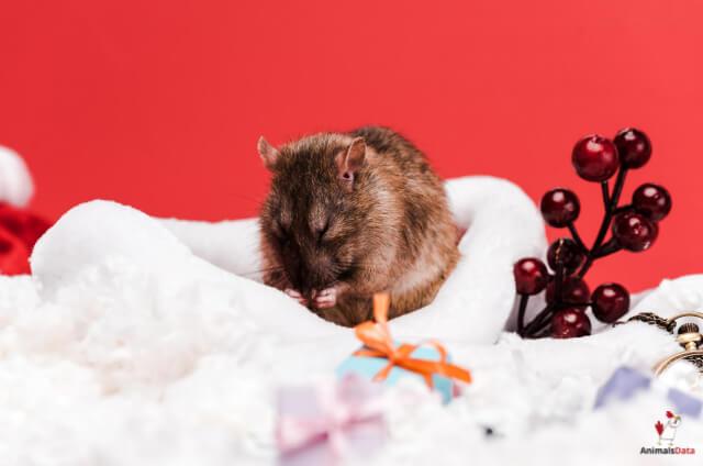 Mice Play Dead