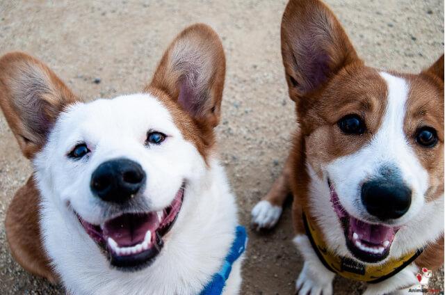 Dogs Communicate