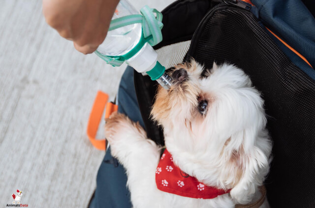 Dog Drinking Lots Of Water And Not Eating