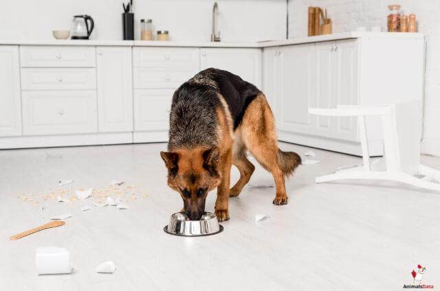 Dogs Eat Scrambled Eggs