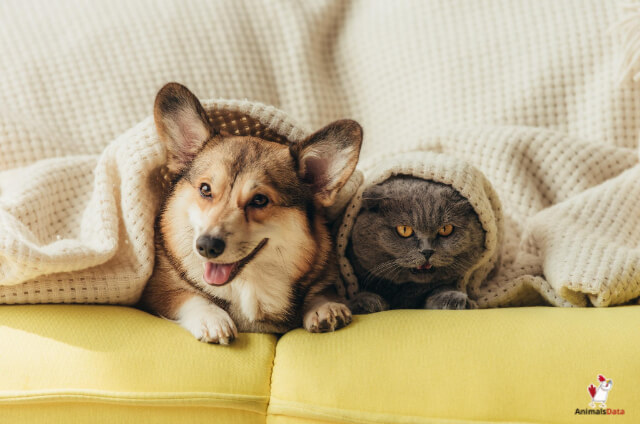 Dogs And Cats Not Get Along