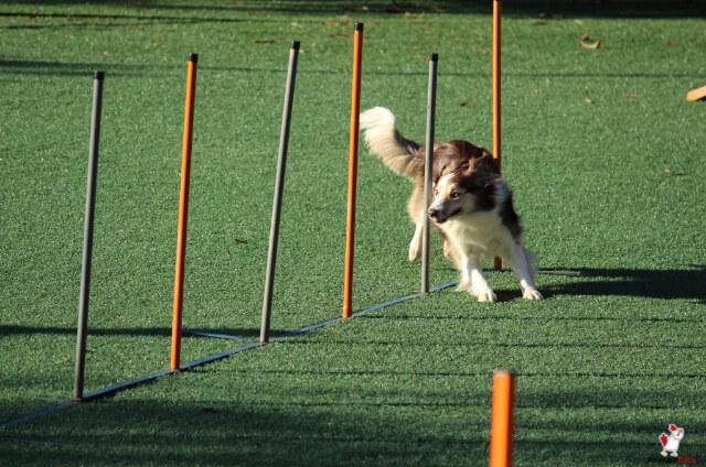 NePoPo Dog Training