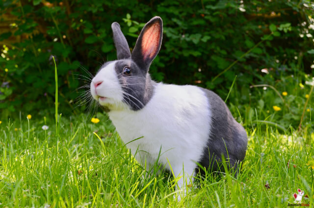 Can Rabbits Fart