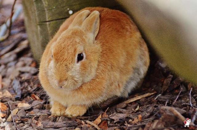 Rabbits Eat Oranges