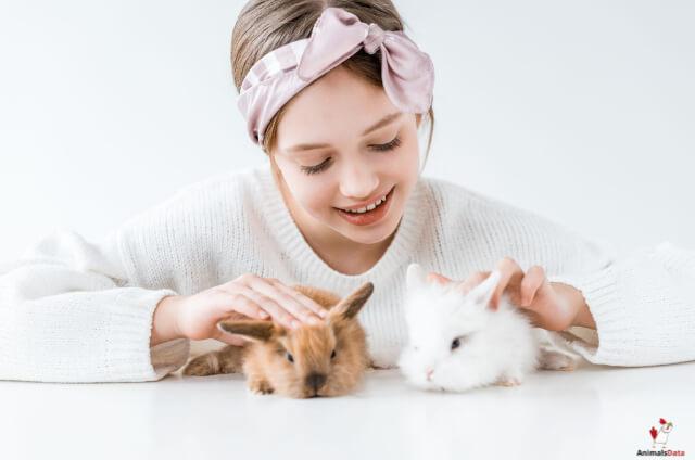 Rabbits Social