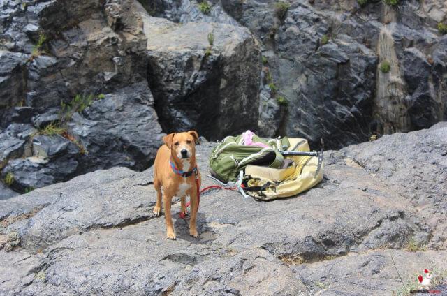 Dog Breeds For Hiking Off Leash