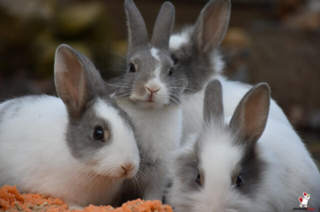 Rabbits Hard To Take Care Of