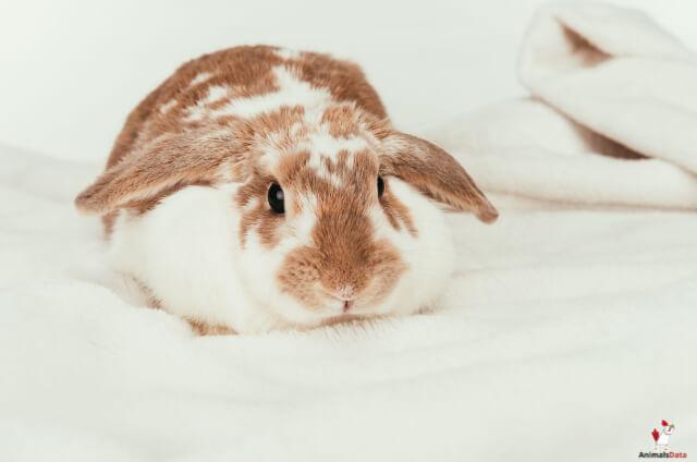 Can Rabbits Eat Pistachios