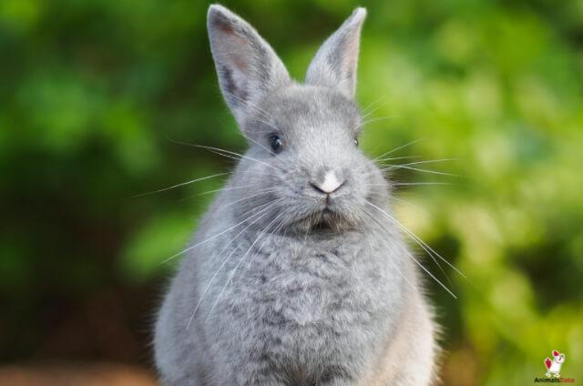 Rabbits Kosher