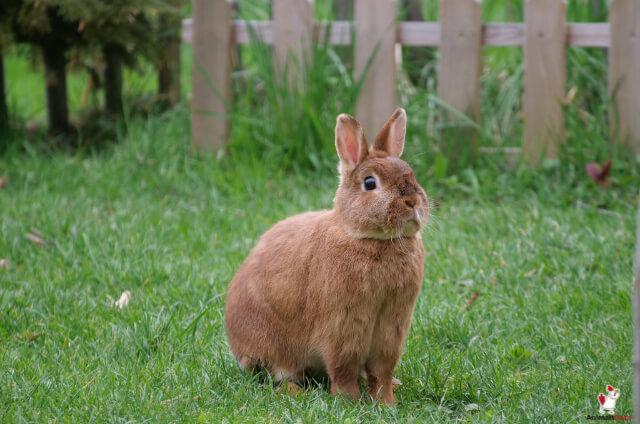 Get Rid Of Rabbits Under Deck