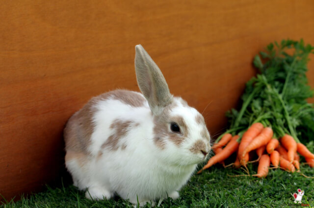 Rabbits Favorite Food