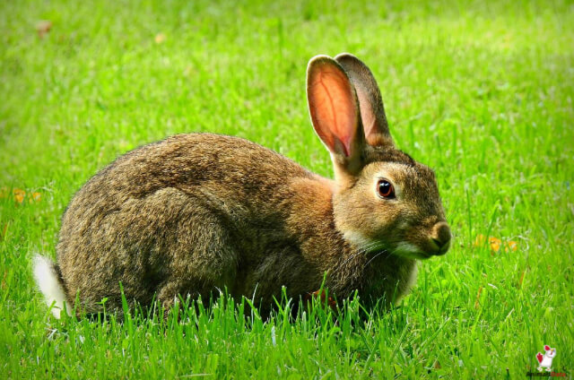 Rabbits Eat Mushrooms