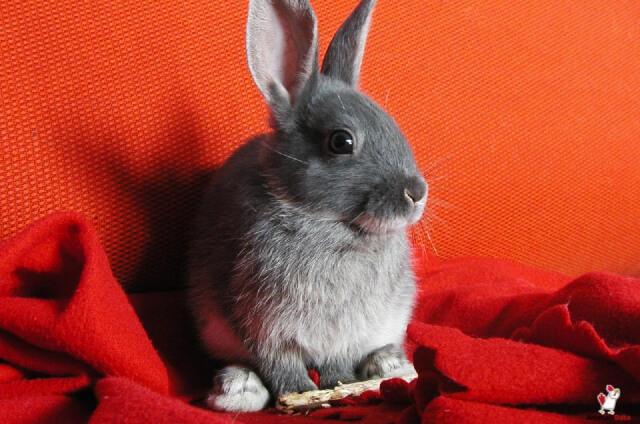 Rabbits Smell