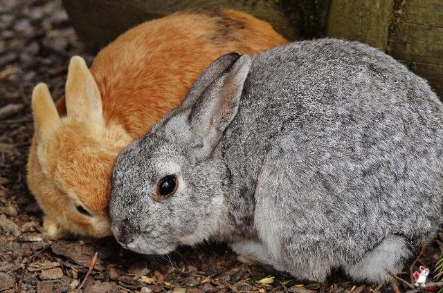 Rabbits Get Rabies