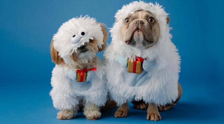 13 Uses Of Merry Christmas Ya Filthy Animal