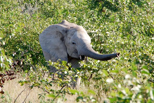 Elephant-Has-Most-Smelling-Sense-Than-Any-Other-Animals